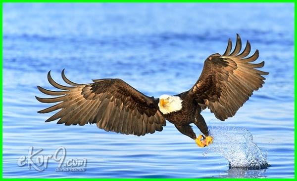 hewan hidup di udara, gambar hewan hidup di udara, contoh hewan hidup di udara, nama hewan hidup di udara, hewan yang hidup di udara dalam bahasa inggris, 10 hewan hidup di udara, hewan yang hidup di udara disebut, hewan yang hidupnya di udara, ciri-ciri hewan hidup di udara, macam macam hewan hidup di udara, gambar hewan yang hidup di udara