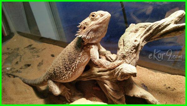 hewan dua kelamin disebut dengan yang punya jenis alat memiliki mempunyai sekaligus jantan dinamakan 2 yg berjenis