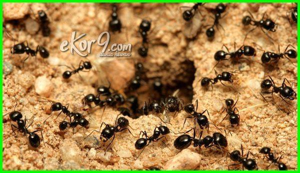 hewan hidup bawah tanah, hewan hidup di bawah tanah, hewan dan tumbuhan hidup di lapisan tanah bagian, contoh hewan hidup di tanah, contoh hewan hidup didalam tanah, jenis hewan hidup di dalam tanah, binatang hidup di tanah