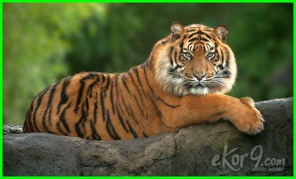 hewan langka di hutan indonesia, hewan langka di indonesia dan habitatnya, hewan langka di indonesia dan habitat aslinya, hewan langka di indonesia beserta habitatnya, habitat hewan langka di indonesia, hewan langka di indonesia dan nama ilmiahnya