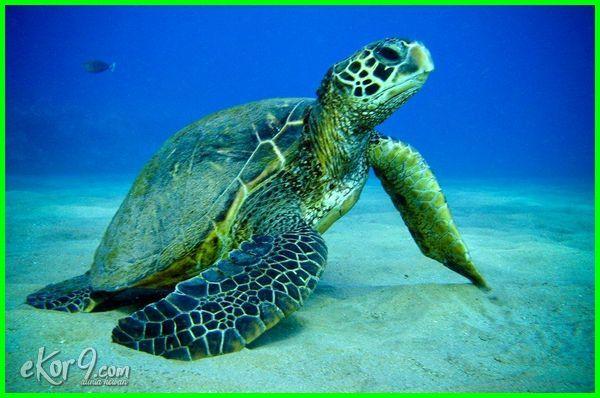 gambar reptil, reptil, jenis-jenis hewan yang termasuk reptil