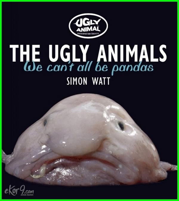 hewan paling jelek, foto hewan paling jelek, gambar hewan paling jelek, hewan yang paling jelek, nama hewan paling jelek, hewan paling jelek sedunia, hewan paling jelek di dunia, binatang paling jelek di dunia, gambar binatang paling jelek, binatang paling jelek sedunia