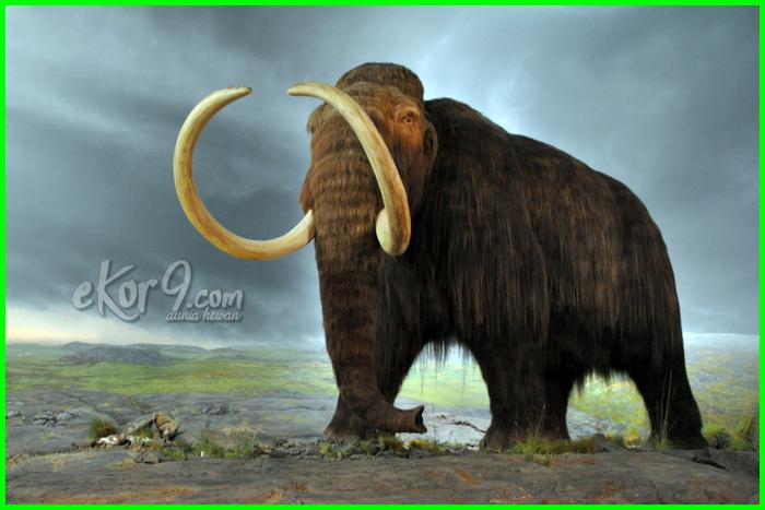 mammoth, hewan punah dihidupkan kembali, 10-12 hewan punah yang ingin dihidupkan kembali, hewan punah yang dihidupkan kembali, hewan punah yang akan dihidupkan kembali, hewan punah yang berhasil dihidupkan kembali, hewan punah yang akan dihidupkan, hewan yang sudah punah dihidupkan kembali