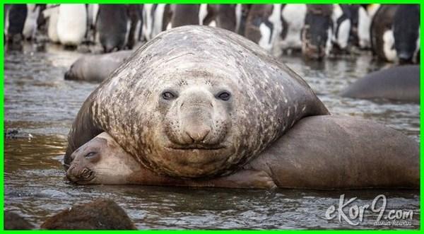 hewan terjelek di dunia ngidam cendol, gambar hewan terjelek, foto hewan terjelek di dunia, nama hewan terjelek di dunia, gambar hewan terjelek di dunia, 10 hewan terjelek di dunia, hewan dengan wajah terjelek