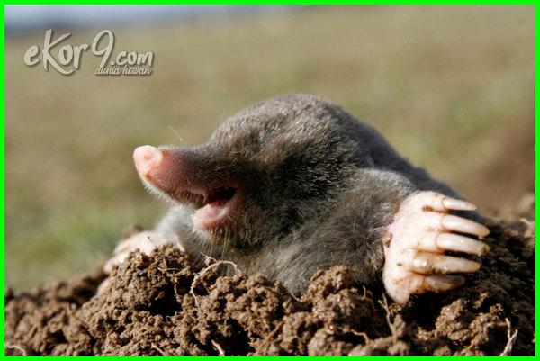 hewan yang hidup di dlm tanah, hewan yang hidup di alam bebas disebut, hewan yang hidup di alam bebas, binatang yang hidup dibawah tanah, hewan yg hidup di bawah tanah