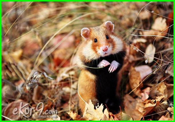 jenis hewan hidup di dalam tanah, hewan yang hidup di tanah, hewan hidup di dalam tanah, gambar hewan hidup di tanah, hewan hidup dalam tanah, hewan yang hidup dibawah tanah nama hewan yang hidup di tanah, hewan yang hidup di permukaan tanah