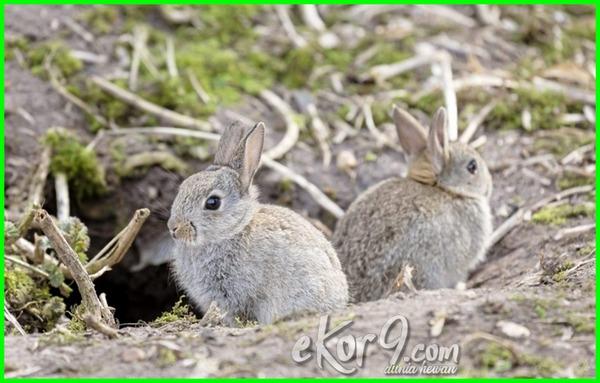 gambar hewan yang hidup di dalam tanah, hewan yang hidup di tanah, macam hewan yang hidup di tanah, sebutkan hewan yang hidup di tanah, jenis hewan yang hidup di dalam tanah, hewan yang hidup di tanah kering