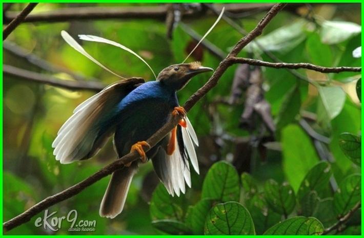 15 Hewan Langka Di Indonesia Beserta Gambar Penjelasan Dan Daerah Asalnya Dunia Fauna Hewan Binatang Tumbuhan Dunia Fauna Hewan Binatang Tumbuhan
