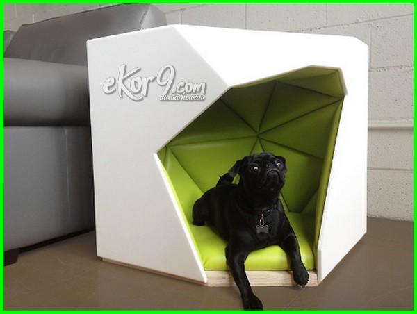 gambar anjing dalam kandang minimalis modern, kandang anjing alien