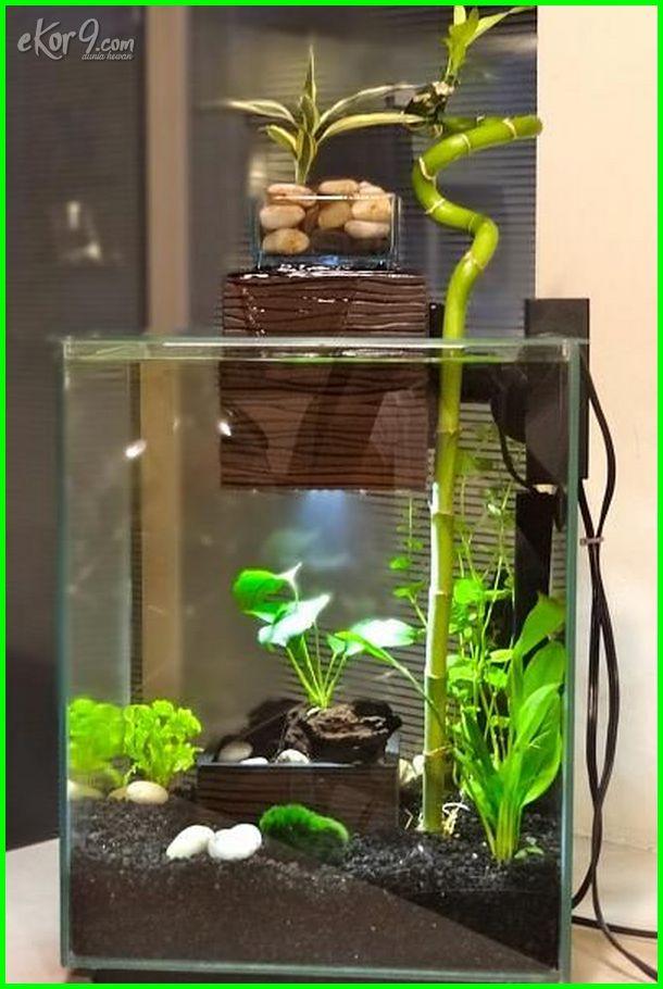 10 Gambar Aquarium Ikan Cupang Unik Minimalis Baik Untuk Hias Dan Petarung Dunia Fauna Hewan Binatang Tumbuhan Dunia Fauna Hewan Binatang Tumbuhan