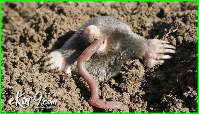 hewan di dalam tanah, foto jenis binatang yang tinggal hidup dalam tanah, contoh hewan aneh bisa hidup darat dan tanah, nama tts, ada apa saja hewan yg di dalam tanah beserta gambarnya, macam-macam hewan misterius di dalam tanah, sebutkan 5 hewan dalam tanah terdalam terbesar raksasa 10 3