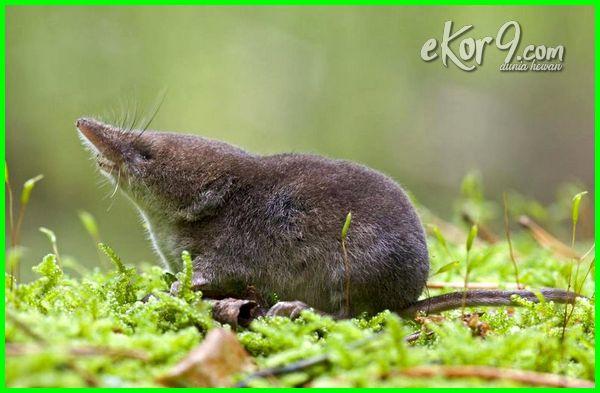 hewan yg ada hidup d tanah, hewan yang hidup di tanah kering, hewan yang hidup di permukaan tanah, tanah tempat hidup hewan dan bakteri, hewan yg hidup didlm tanah, 3 hewan yang hidup di dalam tanah, 5 hewan yang hidup di dalam tanah, 5 hewan yang hidup di tanah, 5 hewan yg hidup di dalam tanah