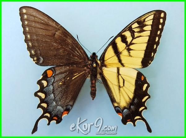 hewan yg mempunyai 2 jenis kelamin, jenis kelamin pada hewan, penentuan jenis kelamin pada hewan, penentuan jenis kelamin hewan