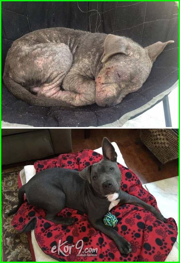 foto hewan sedih, kisah hewan yang sedih, cerita hewan yang sedih, gambar hewan yang sedih, gambar hewan yg sedih