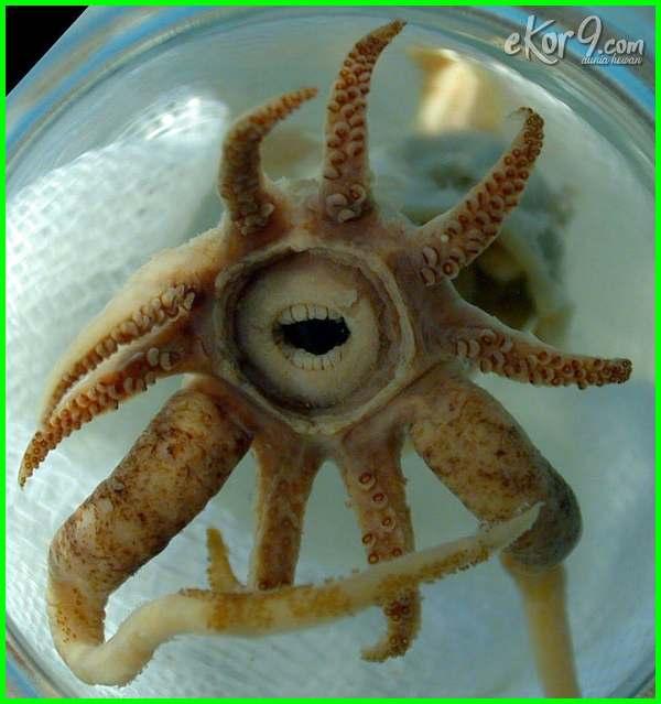 hewan laut paling aneh, foto hewan laut aneh, hewan aneh di laut australia, hewan laut berbentuk aneh, hewan laut dengan bentuk aneh, hewan aneh bawah laut, hewan aneh di bawah laut, hewan bawah laut yang aneh, hewan aneh di laut segitiga bermuda, hewan bawah laut paling aneh