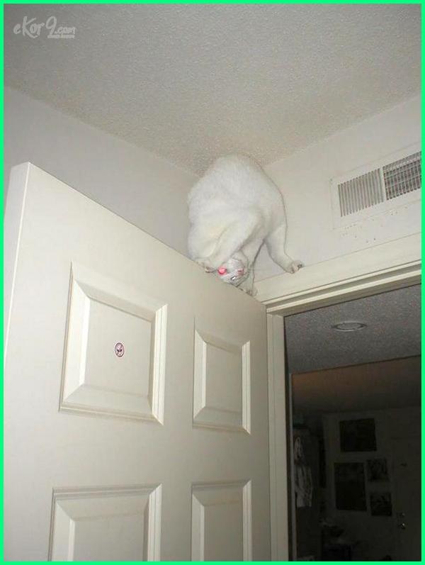 cat climbing door
