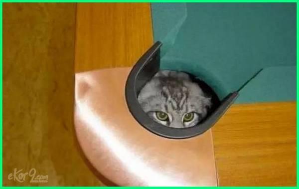 cat hiding cabinet,cat hiding corner, cat constantly hiding, hidden cat emoticon, cat hiding how to get out, cat hiding in box, cat hiding images cat limping hiding, cat likes hiding, cat hidden litter box