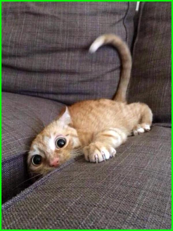 kucing terjepit di kursi sofa