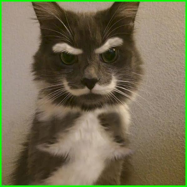 kucing kaya editan nih