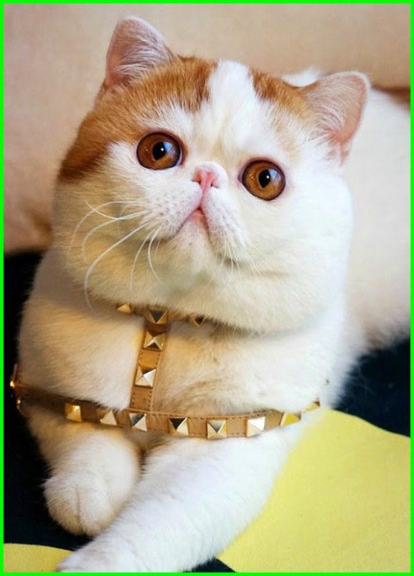 Gambar Kucing Editan Lucu godean.web.id