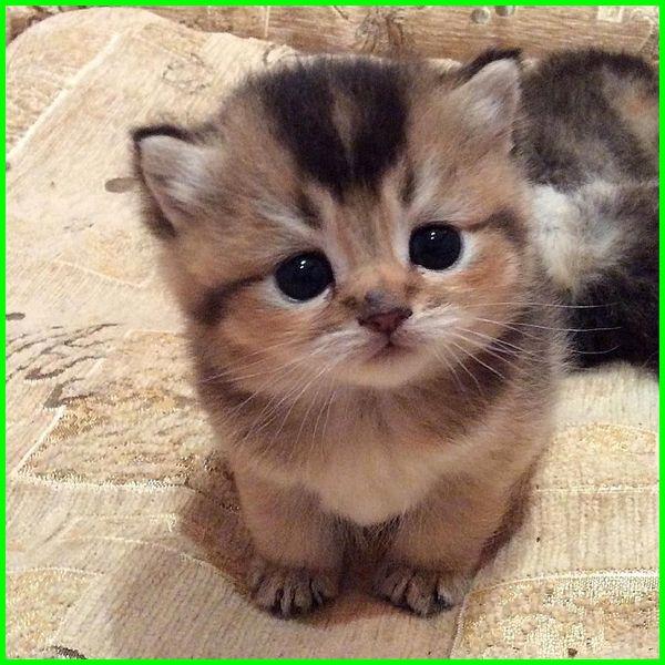 Kucing Comel Sedih Kucingcomel Com