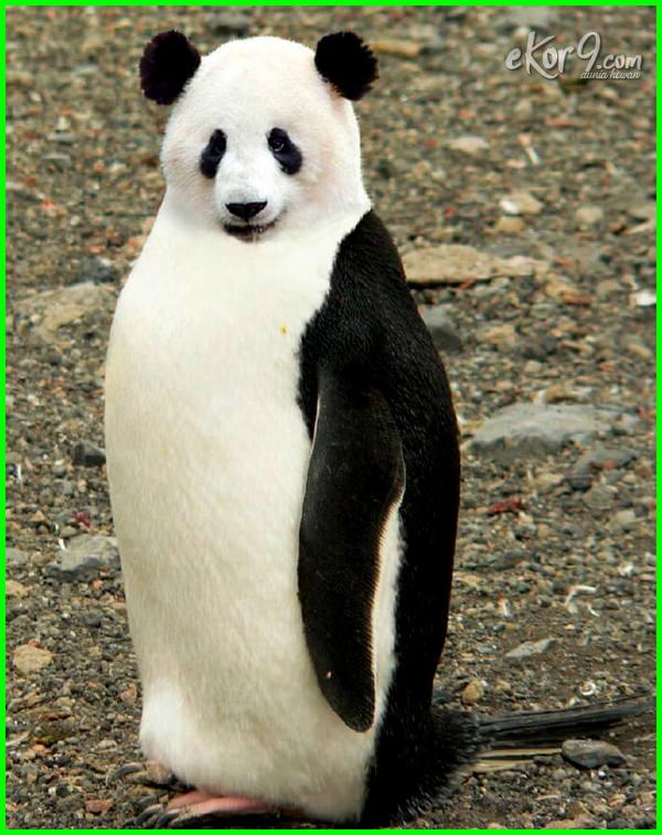 gambar binatang lucu editan, gambar binatang lucu facebook, gambar binatang lucu fb, gambar binatang lucu gokil, gambar binatang lucu imut, gambar binatang laut lucu, gambar binatang paling lucu, gambar selfie binatang lucu, gambar binatang lucu terbaru