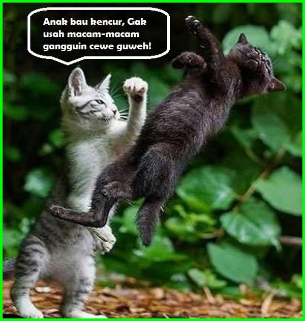 gambar kucing dengan kata kata cinta, kata kata kucing jatuh cinta, kata kata cinta tentang kucing, kata kata cowok pecinta kucing, kata kata cinta untuk kucing, kata kata cowok suka kucing