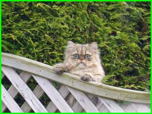 gambar ekspresi kucing kaget