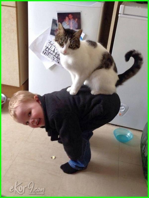 gambar foto kucing yang lucu