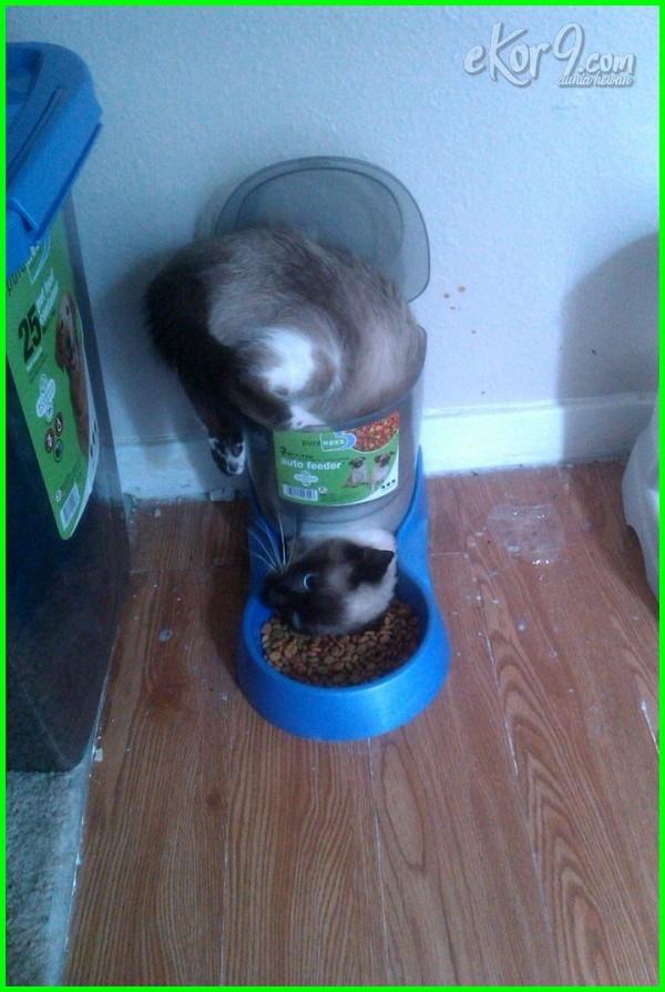 kucing jungkir balik, gambar kucing lucu gemesin, download gambar kucing lucu free, gambar kucing lucu dan aneh, foto kucing comel lucu, foto kucing lucu.com, gambar kucing ciuman lucu, foto kucing lucu cantik