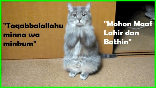 kucing maaf, kucing minta maaf, kucing comel minta maaf, kucing lucu minta maaf, kucing imut minta maaf, maaf kumis kucing, manfaat daun kumis kucing, maafkan aku kucing, maaf daun kumis kucing, gambar kucing minta maaf, foto kucing minta maaf, meme kucing minta maaf, video kucing minta maaf, cara kucing minta maaf