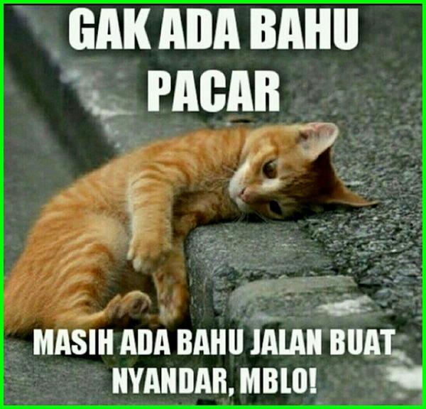 foto kucing lucu dan kata, foto kucing lucu dan kata katanya, foto kucing lucu dengan kata, gambar kucing lucu ada kata kata