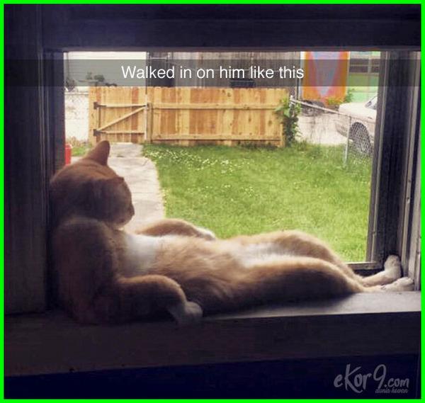 gambar kucing lucu.com