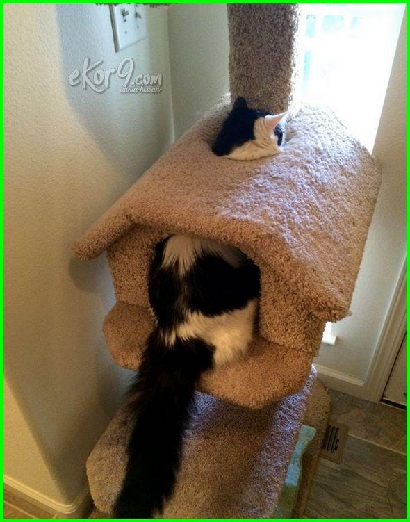 gambar kucing yang lucu dan menggemaskan, gambar kucing terlucu, foto kucing lucu terbaru, gambar kucing terlucu di dunia, gambar kucing lucu untuk wallpaper