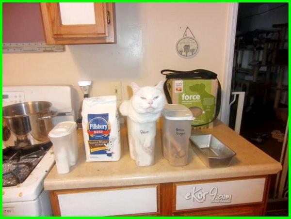 gambar kucing lucu bikin tertawa, gambar kucing lucu dan unik, gambar kucing yang lucu, gambar wallpaper kucing lucu, gambar kucing lucu warna putih, gambar kucing lucu warna warni