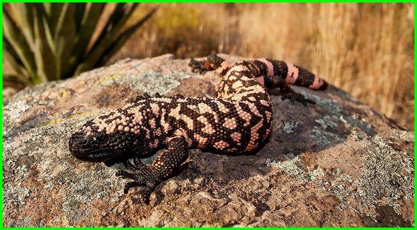 adaptasi hewan yang hidup di padang pasir, jenis hewan yang hidup di padang pasir, ciri hewan yang hidup di padang pasir, hewan yang dapat hidup di padang pasir adalah, gambar hewan yang hidup di padang pasir, hewan apa yang hidup di padang pasir, hewan yang mampu hidup di padang pasir, nama hewan yang hidup di padang pasir, bentuk adaptasi hewan yang hidup di padang pasir, cara adaptasi hewan yang hidup di padang pasir, sebutkan hewan yang hidup di padang pasir