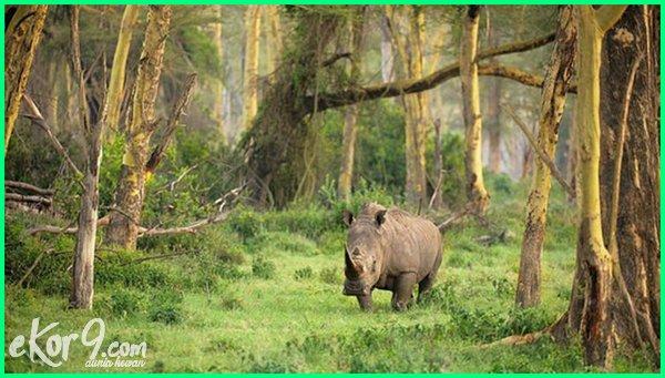 10 hewan langka di indonesia dan tempat perlindungannya, 10 hewan langka di indonesia dan tempat asalnya, hewan langka di indonesia beserta tempat asalnya, hewan dan tumbuhan langka di indonesia beserta tempat asalnya, hewan langka di indonesia beserta tempat pelestariannya, hewan dan tumbuhan langka di indonesia beserta tempat pelestariannya