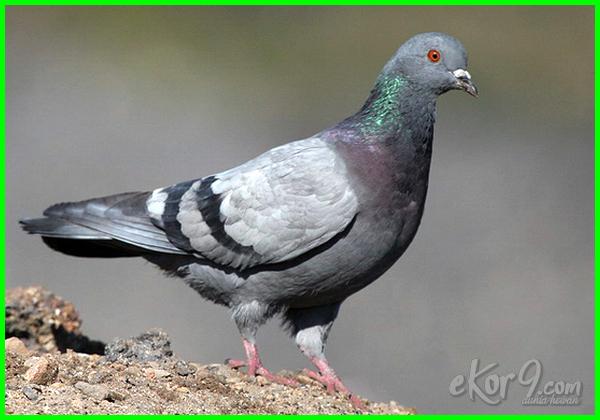 hewan yang mendengar bunyi infrasonik adalah, hewan dengan suara infrasonik, hewan yang mengeluarkan suara infrasonik, hewan yang mendengar suara infrasonik, hewan yg memiliki suara infrasonik, hewan yg mendengar suara infrasonik, hewan yang termasuk infrasonik, hewan yg termasuk infrasonik