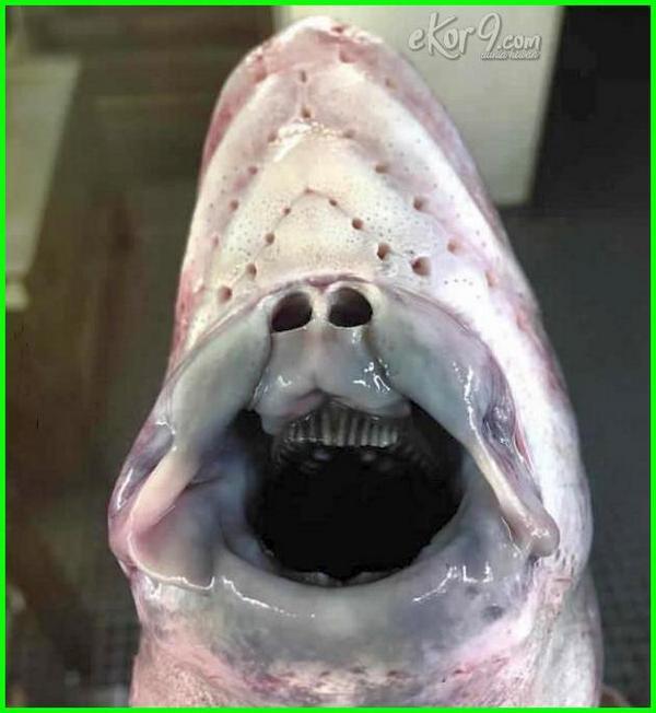 ikan laut aneh dalam yang foto paling jenis gambar bawah di barents dasar terdalam kedalaman meksiko teraneh