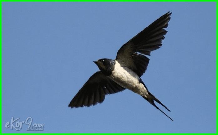 burung yang makan serangga