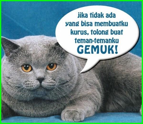 kucing gemuk lucu