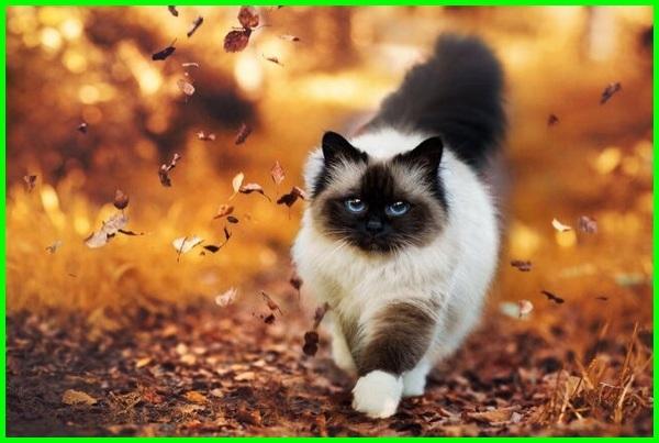 wallpaper kucing cantik dan imut di dunia keren