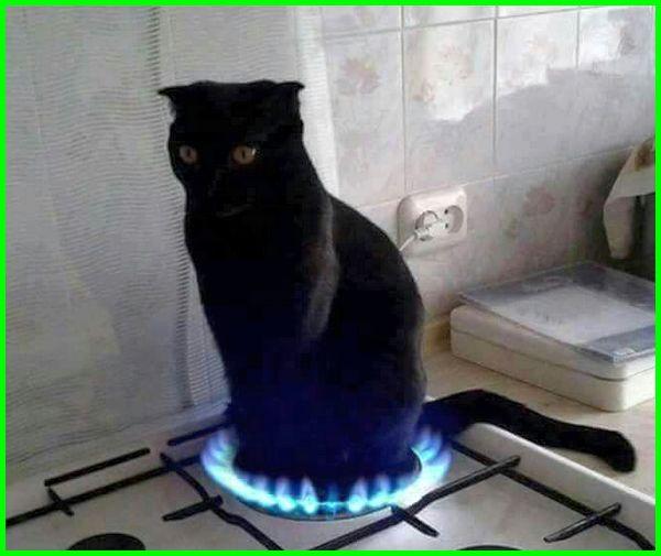 kucing diatas kompor gas, kucing lucu banget, kucing garang, kucing keren