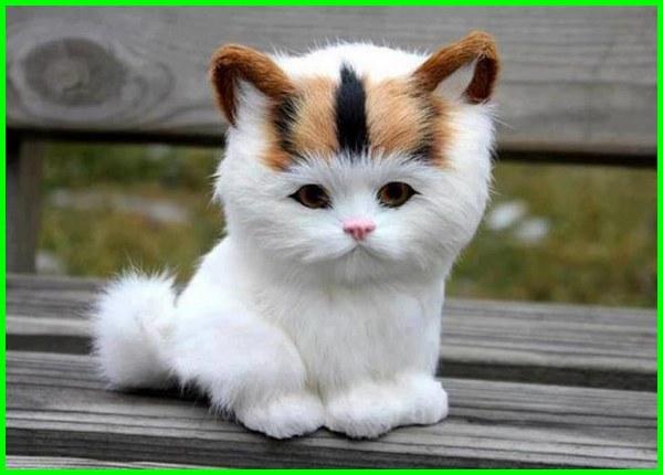 Gambar Kucing Lucu godean.web.id