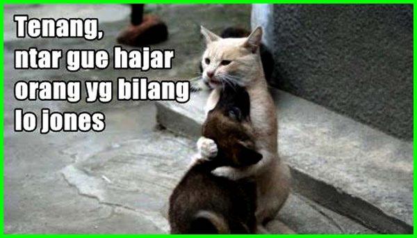 kucing pelukan sama anjing