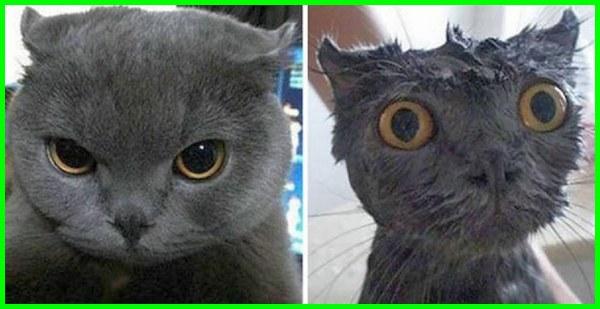 mandi kucing artinya,kucing boleh mandi, cara kucing mandi sendiri, mandi kucing full, kucing mandi gambar, mandi kucing grooming, kucing habis mandi, mandi kucing itu apa sih, kucing lepas mandi, kucing lg mandi