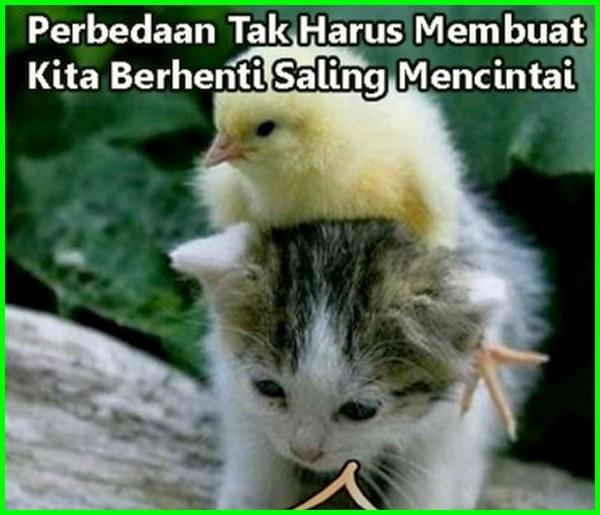gambar kucing dan ayam