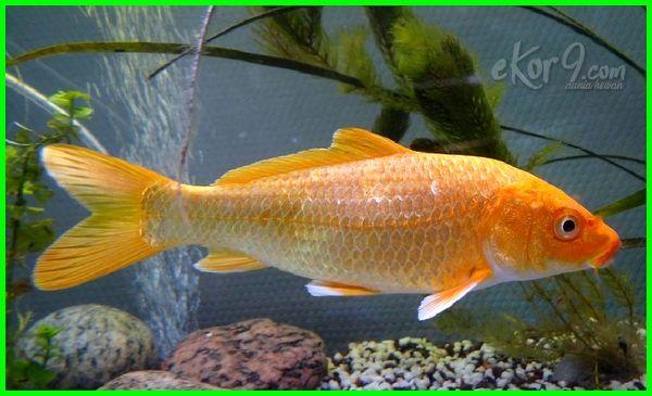 daftar hewan insektivora termasuk ikan