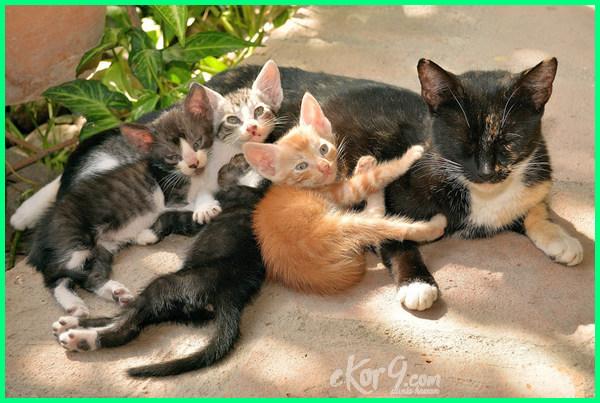 merawat kucing anggora setelah melahirkan, perawatan kucing anggora setelah melahirkan, merawat induk kucing pasca melahirkan, cara merawat kucing anggora setelah melahirkan, cara merawat anak kucing setelah melahirkan, cara merawat kucing setelah melahirkan, cara merawat induk kucing setelah melahirkan, cara merawat kucing persia setelah melahirkan, perawatan setelah kucing persia melahirkan