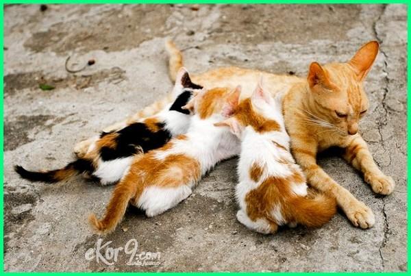 4 Cara Merawat Induk Kucing Setelah Melahirkan Dunia Fauna Hewan Binatang Tumbuhan Dunia Fauna Hewan Binatang Tumbuhan